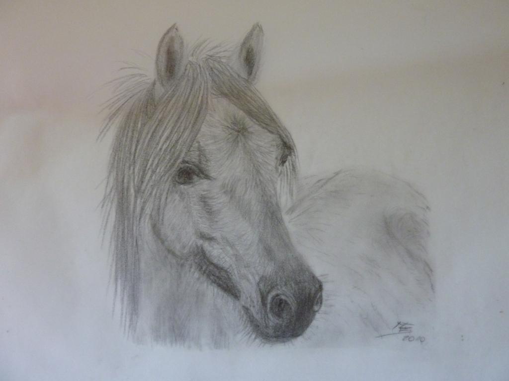 pferde malen für anfänger