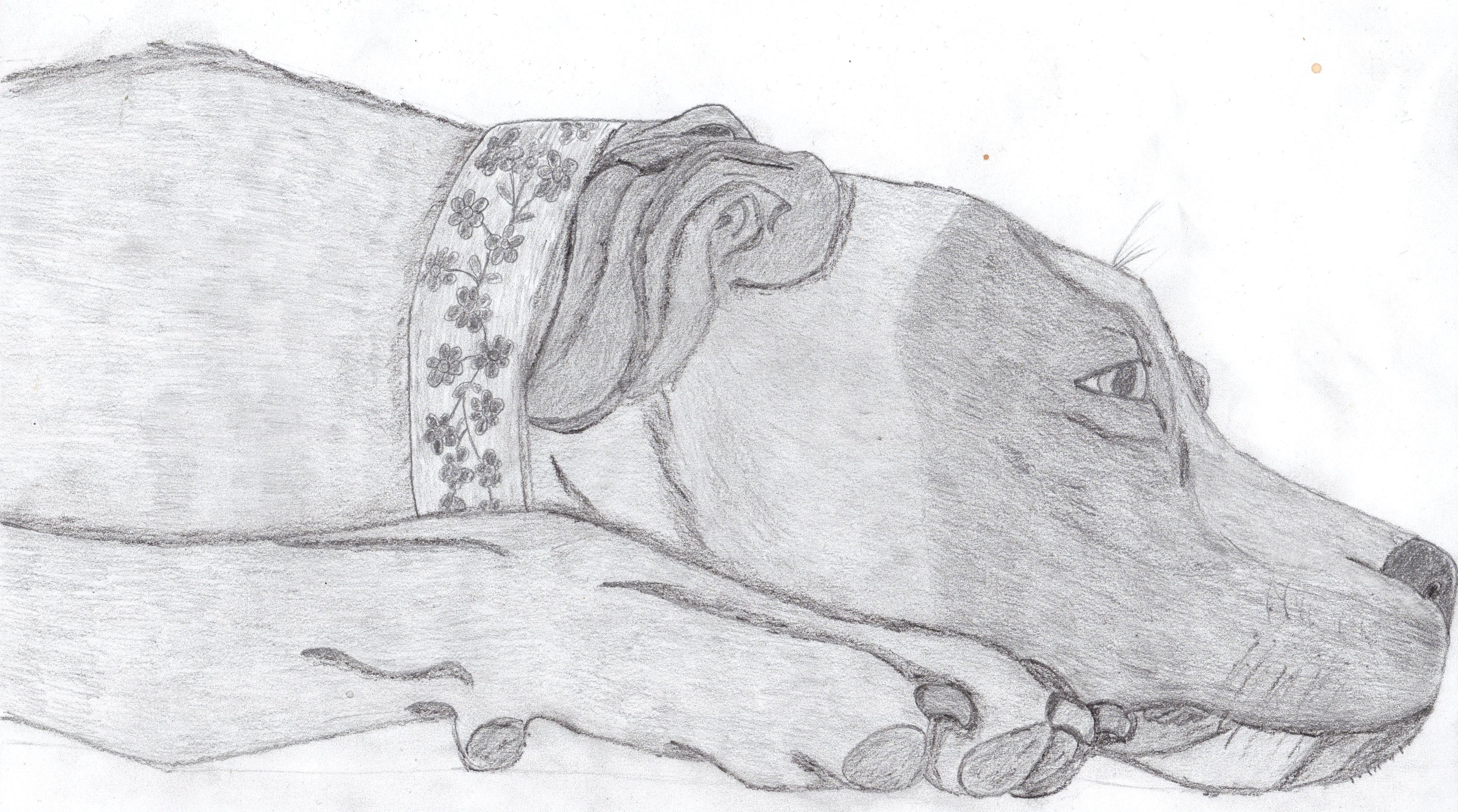meine hundezeichnungen  tiere  genial zeichnen lernen